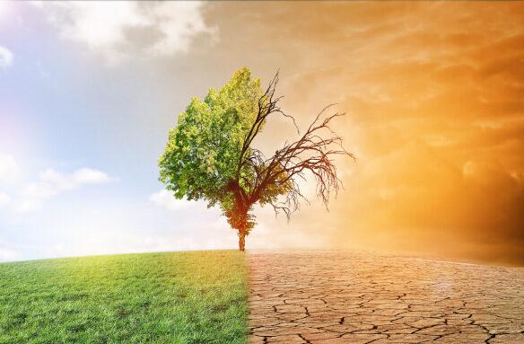 Umwelt- und Klimaschutz mit Pellets