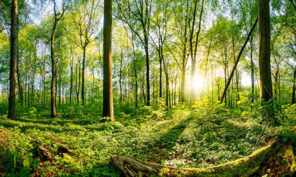 Wald Naturholz
